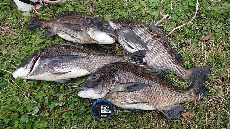 境水道での釣果
