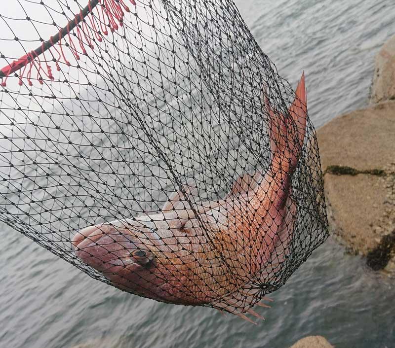45センチの真鯛がヒット