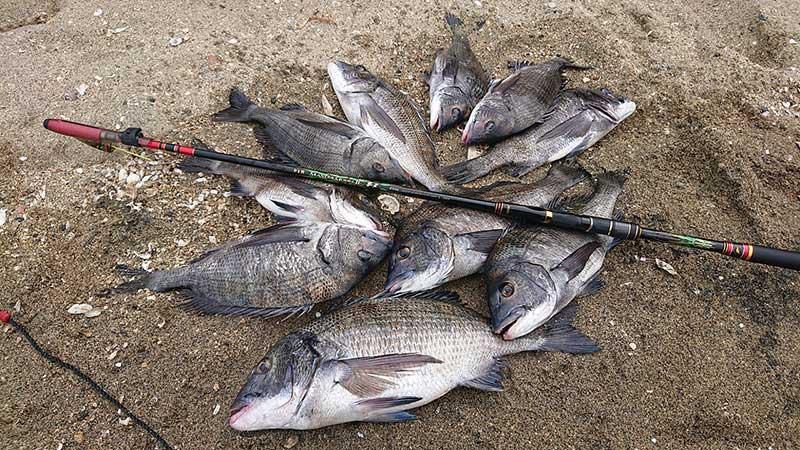 当日の釣果の一部