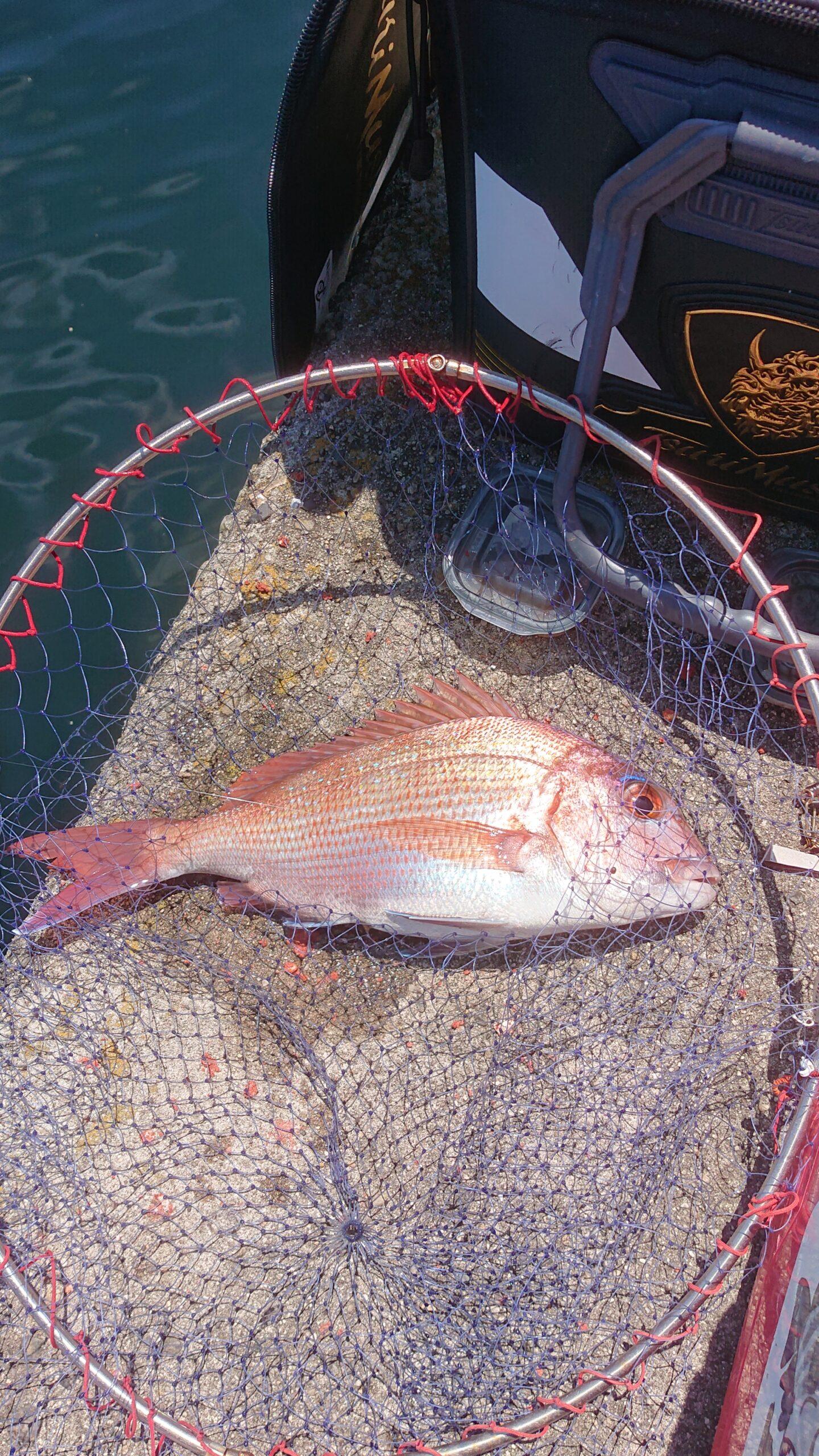 阿多田島 真鯛 釣り