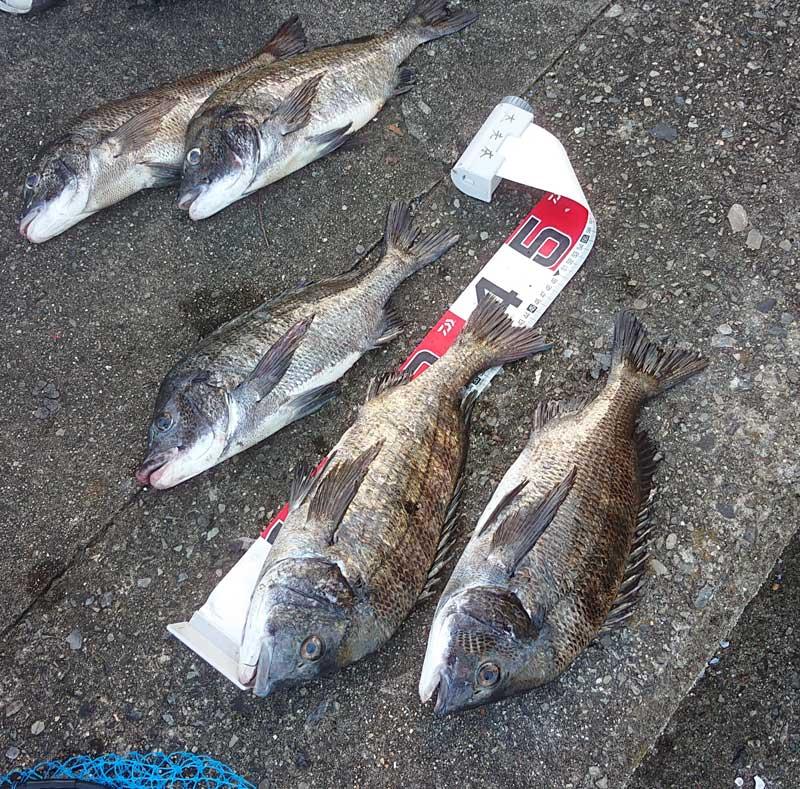 阿多田島の波止 釣果