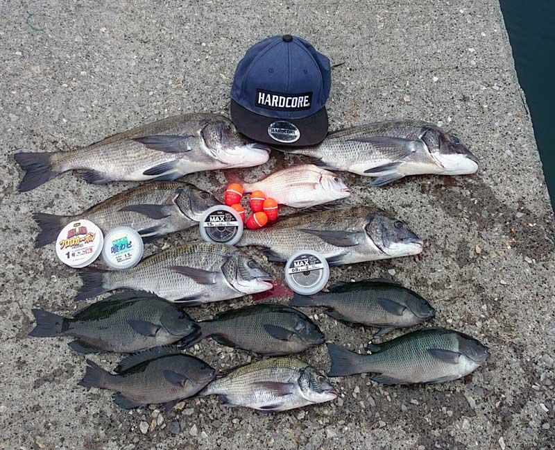 周防大島 フカセ釣り 釣果